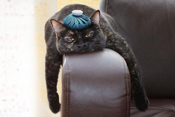二日酔いで、ぐったりしている黒い猫